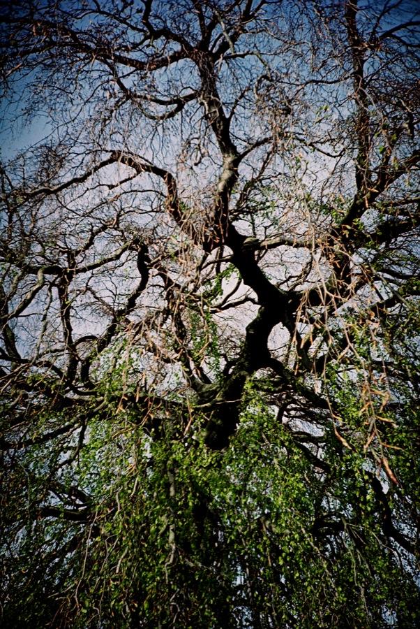 http://lafilladelfotografu.irenavisa.com/files/gimgs/39_arbre.jpg