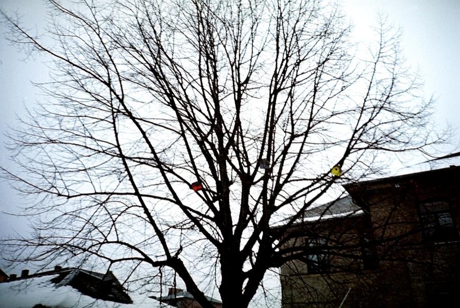 http://lafilladelfotografu.irenavisa.com/files/gimgs/39_casesocells.jpg