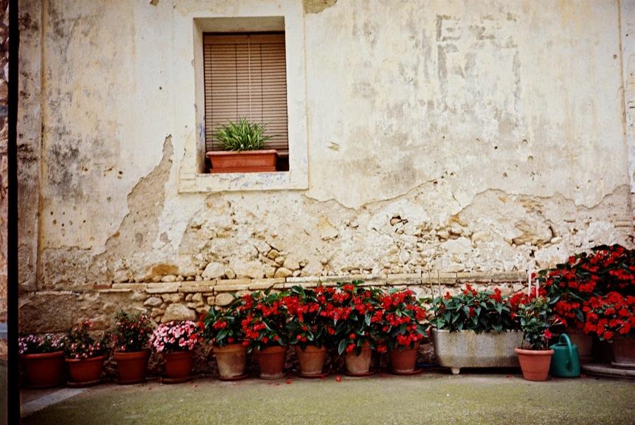 http://lafilladelfotografu.irenavisa.com/files/gimgs/42_flors-vermelles.jpg