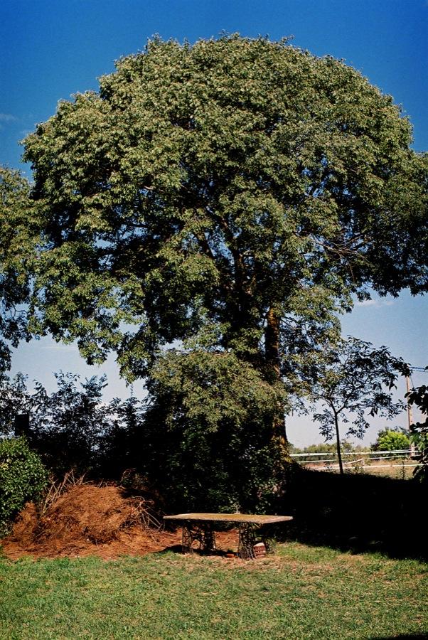 http://lafilladelfotografu.irenavisa.com/files/gimgs/45_arbretaula.jpg