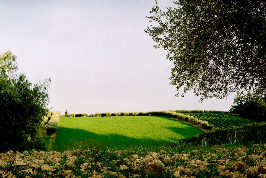 http://lafilladelfotografu.irenavisa.com/files/gimgs/46_olivar.jpg