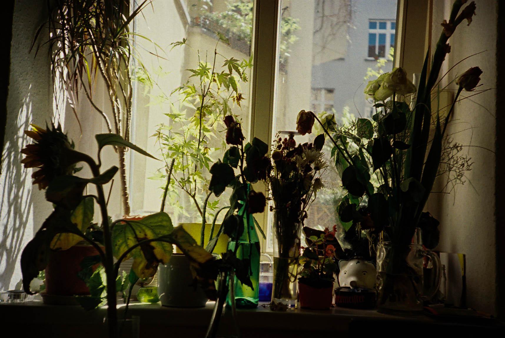 http://lafilladelfotografu.irenavisa.com/files/gimgs/48_flors-contra.jpg