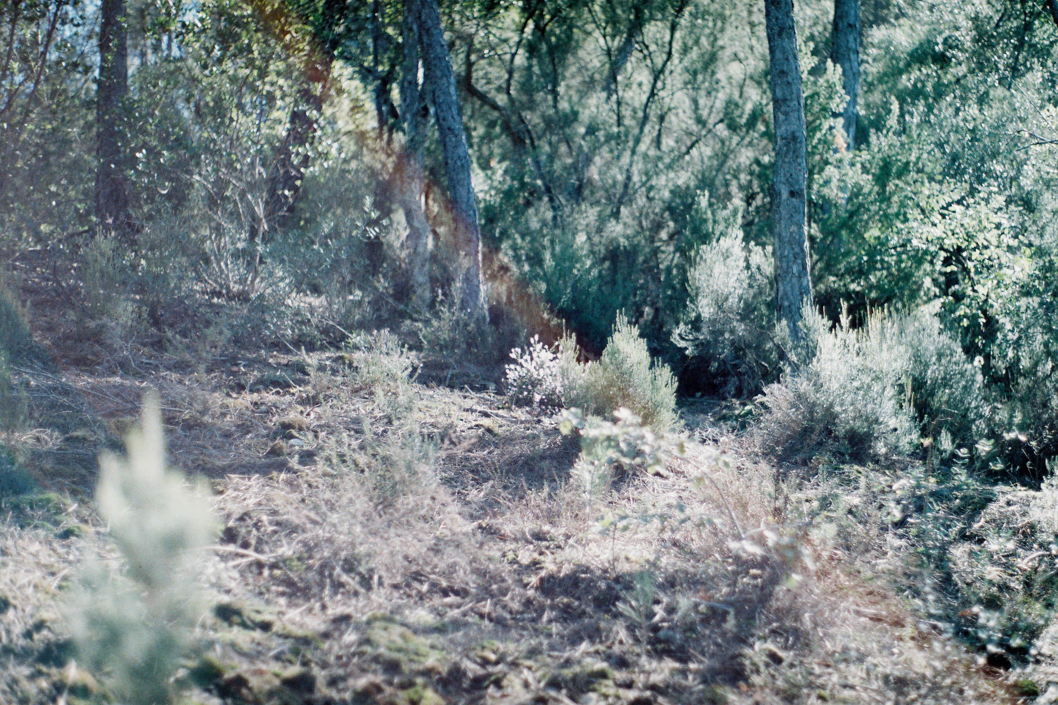 http://lafilladelfotografu.irenavisa.com/files/gimgs/67_f1030013.jpg