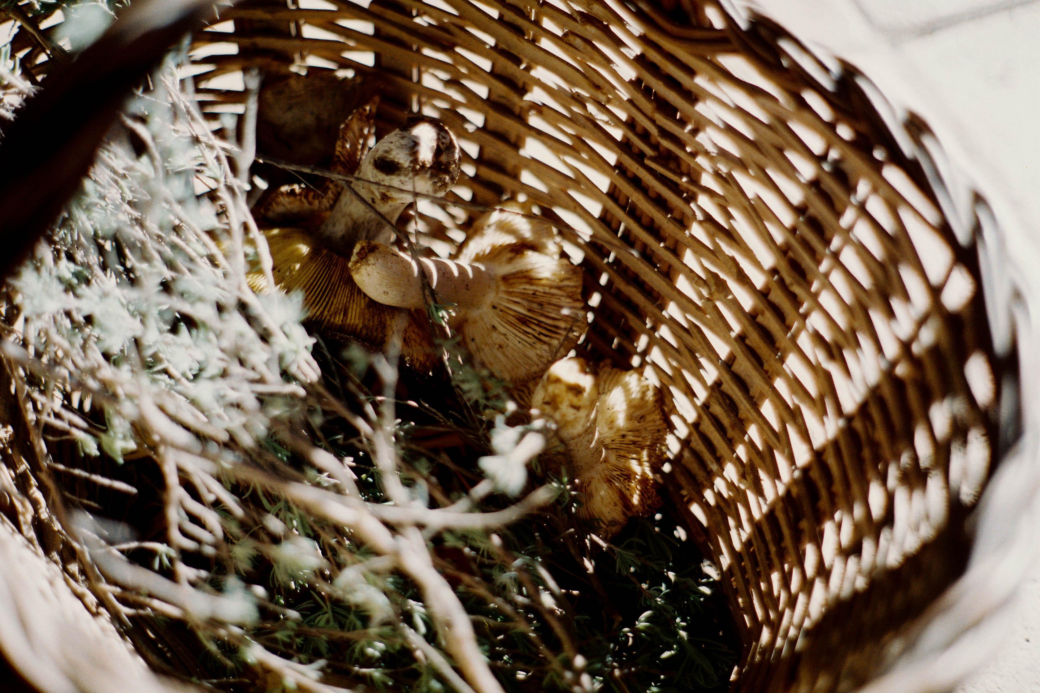 http://lafilladelfotografu.irenavisa.com/files/gimgs/67_f1030018.jpg